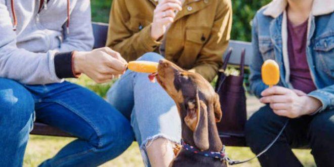 alimentos prohibidos para perros salchicha