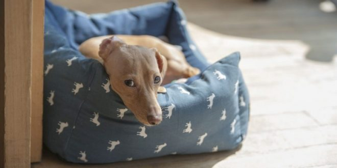 camas para perros salchicha