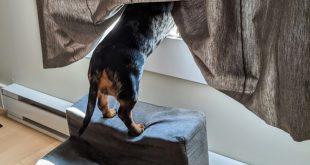 rampas para perros
