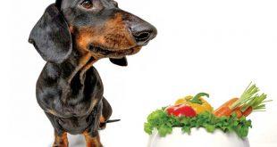 comida vegana para perro salchihca