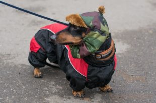 Abrigos para perros salchicha