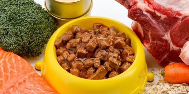 comida húmeda para perros salchicha