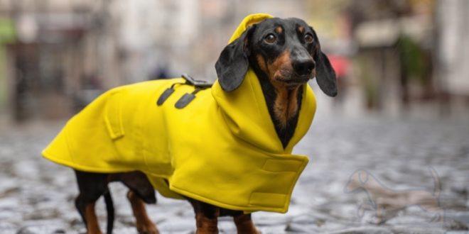 impermeables para perros salchicha