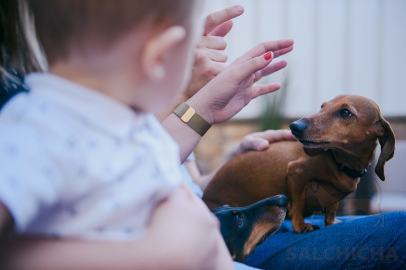 perro salchicha y bebé