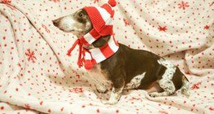 Juguetes navideños para perros salchicha