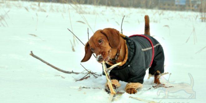 abrigo para perro teckel
