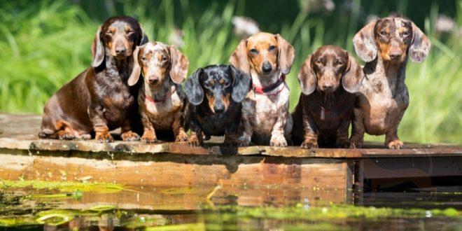 Botellas de agua para perros salchicha